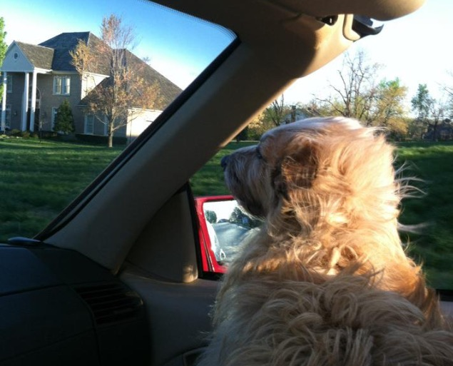 Riding in a convertible