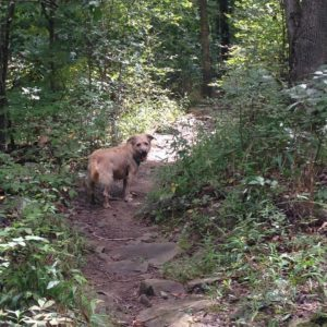 Fayetteville's off-leash hiking area