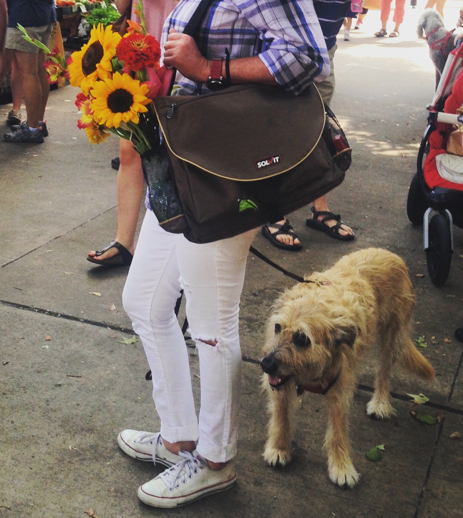 HomeAway Travel Organizer for dogs on the go