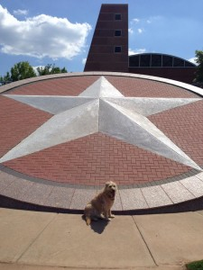 Henri IS the Star of Texas.