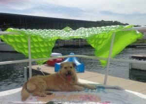 Impromptu dog shade