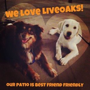LiveOaks dog-friendly patio