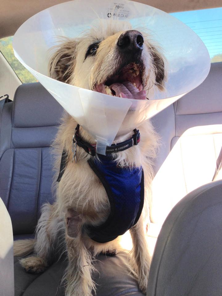 Conehead dog