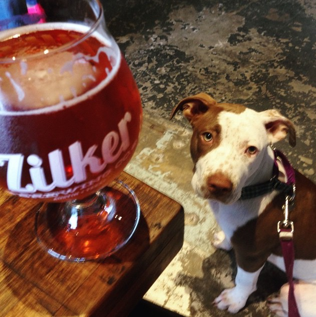 Dogs can't have beer