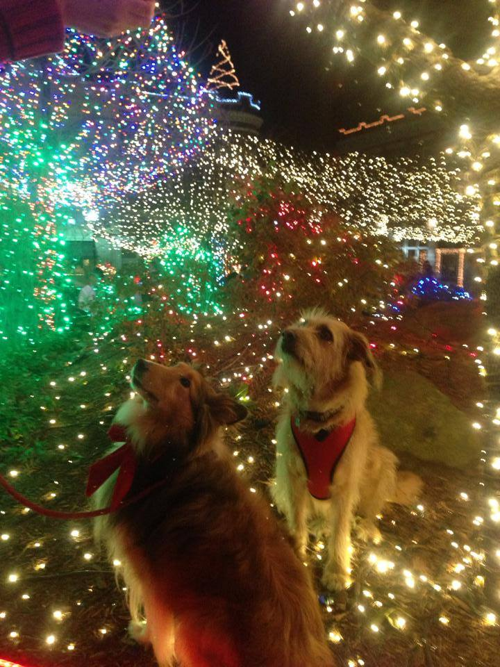 5 Dog Friendly Holiday Light Displays