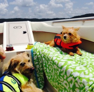 Doggie life jackets are an important boat accessory