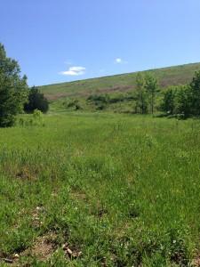 Sprawling meadow at Tanyard Creek