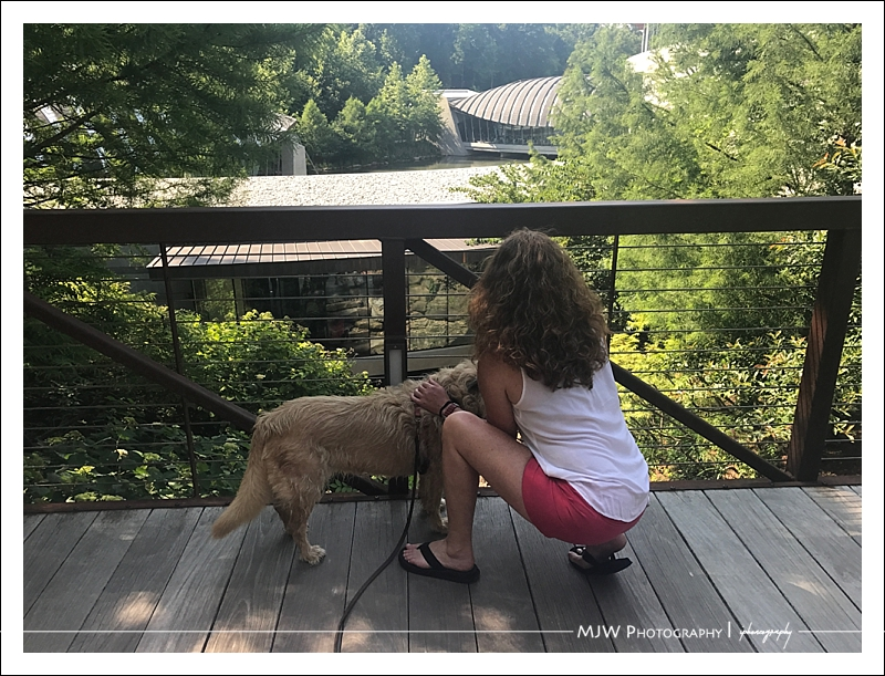 Crystal Bridges Museum of American Art Makes Art Accessible (To Dogs)