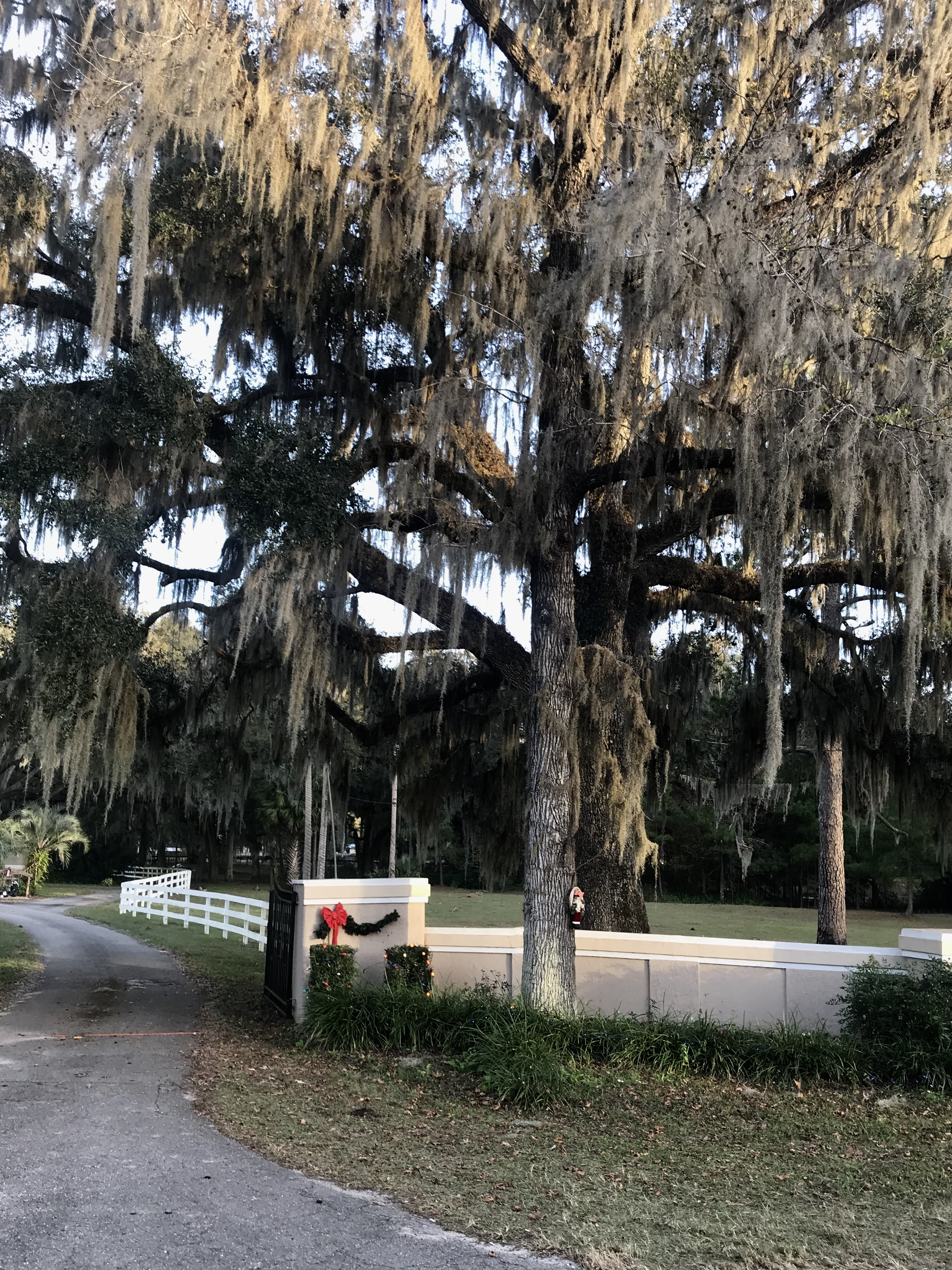 Drive for through Ocala, Florida for some southern scenery that can't be beat.