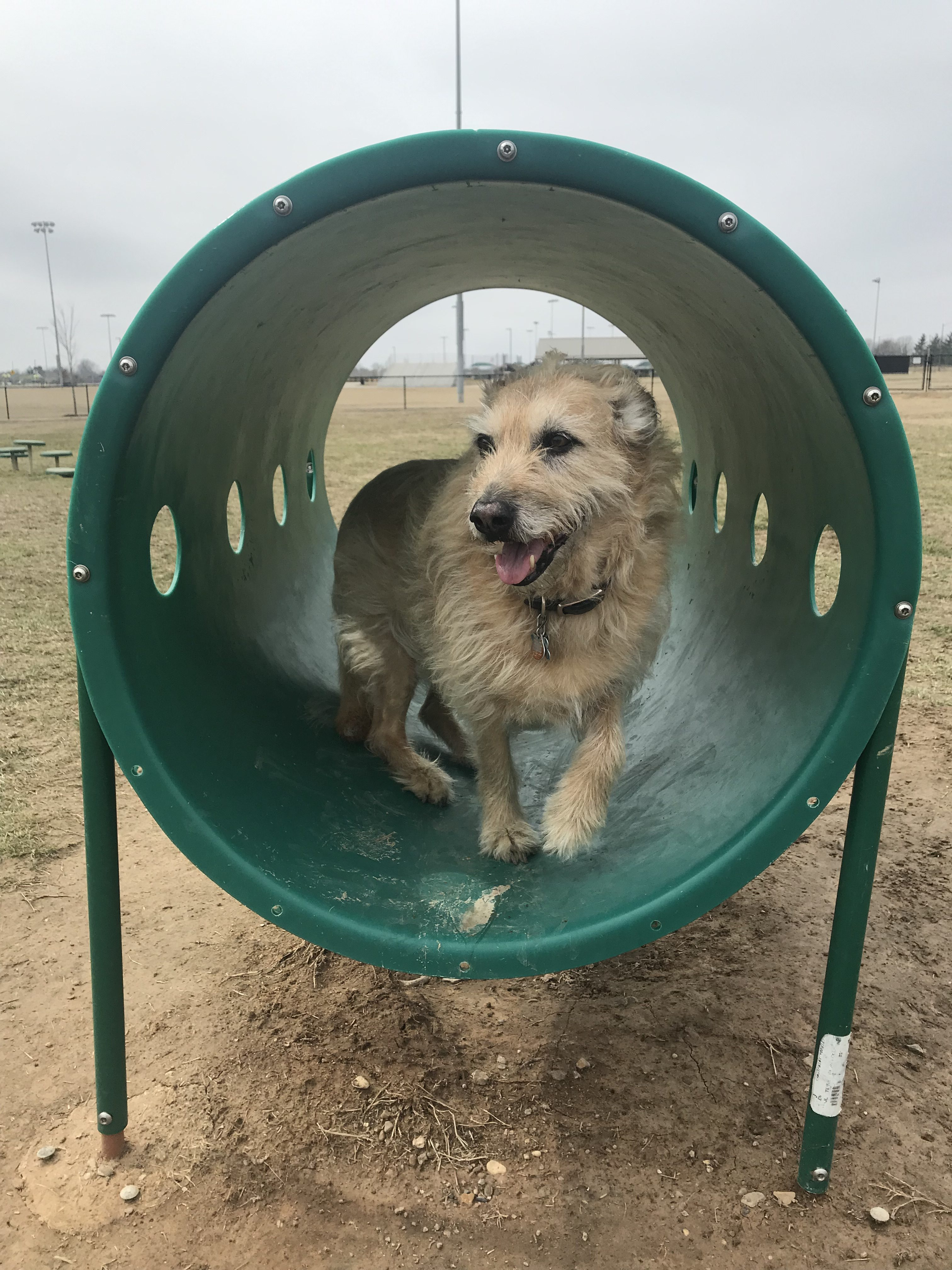 Springdale dog park agility equipment