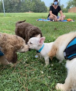 Puppies gather to play and socialize