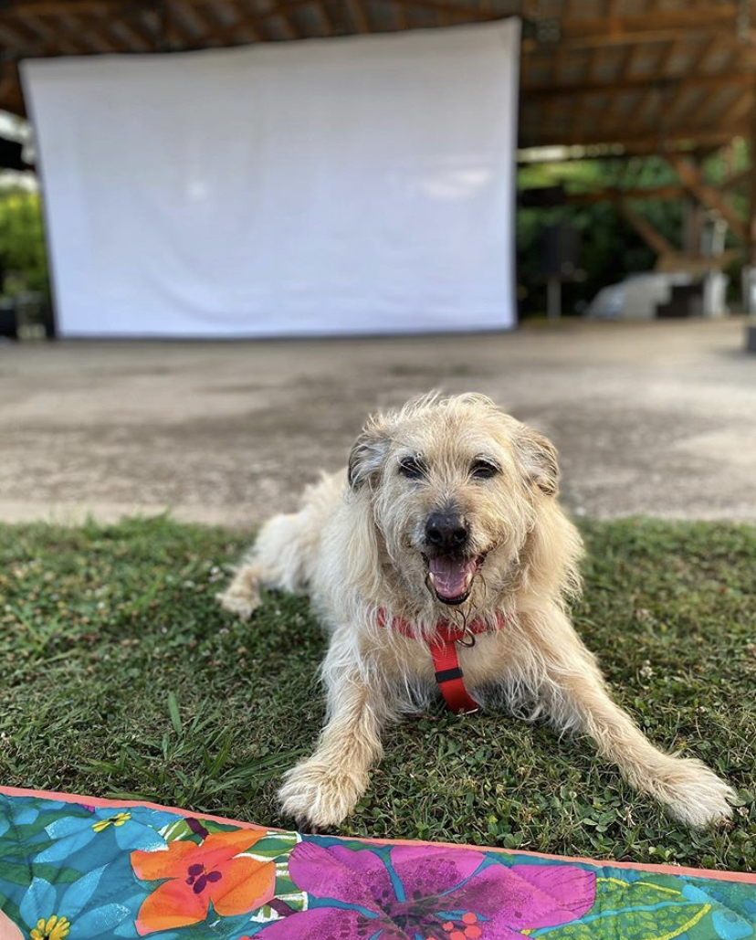 Dog friendly outdoor movies