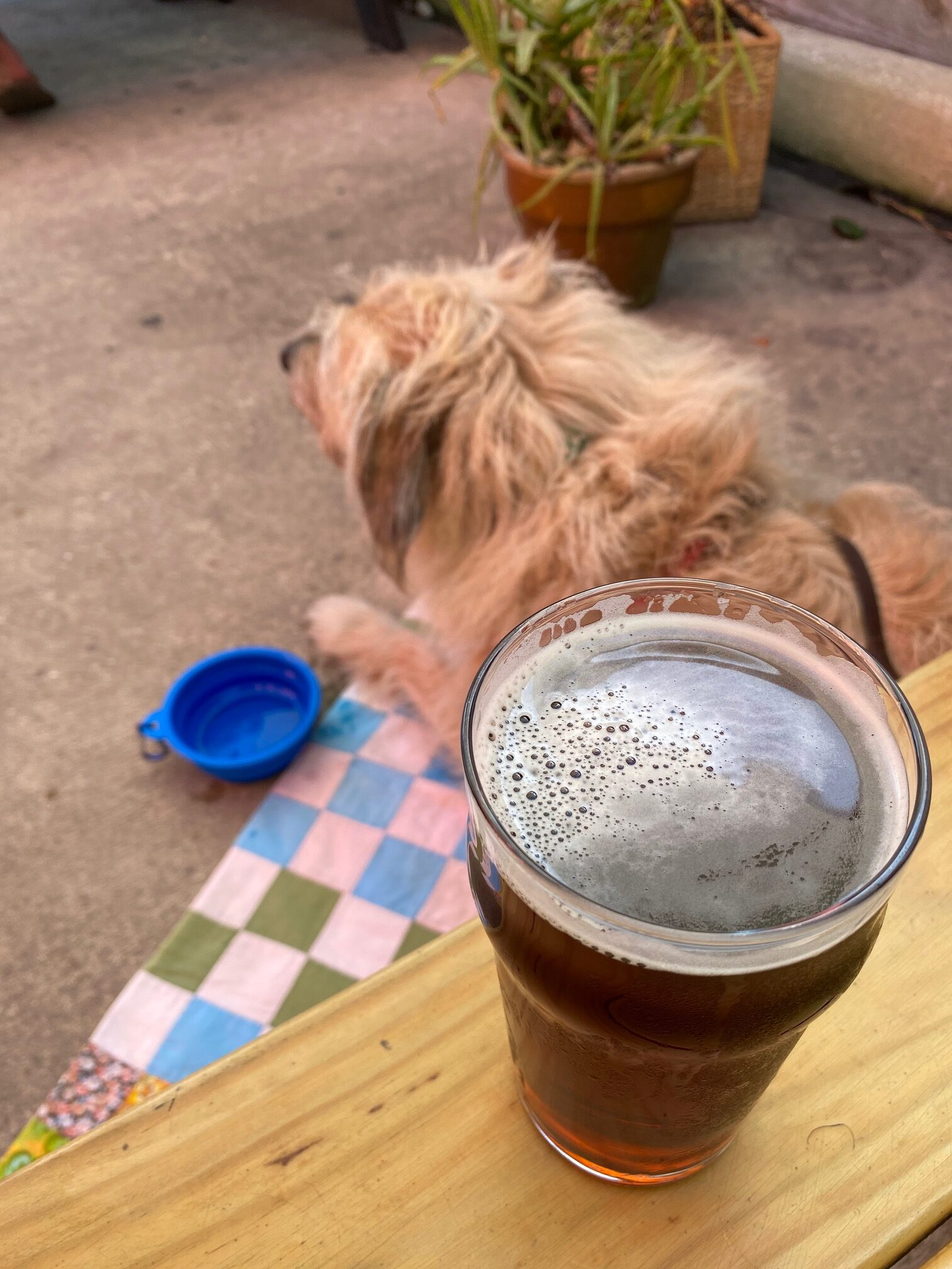 Dog friendly brewery in St. Augustine
