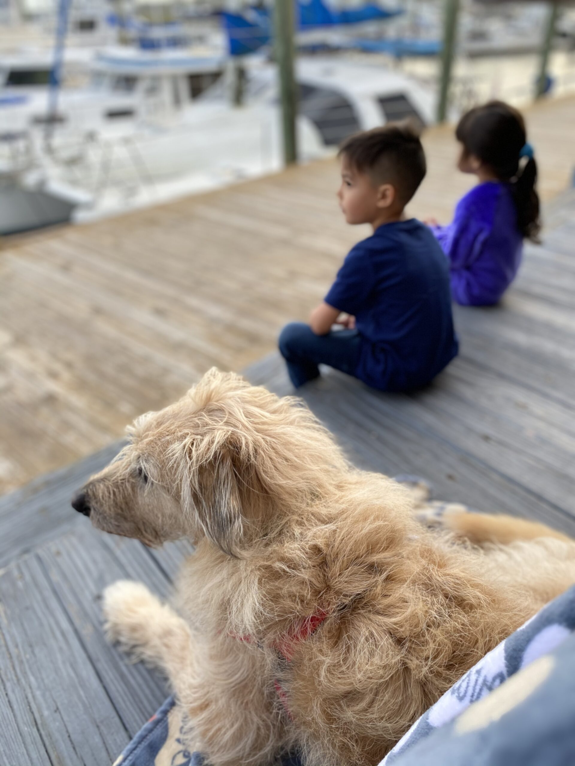 Dog friendly marina restaurant in St. Augustine, Florida