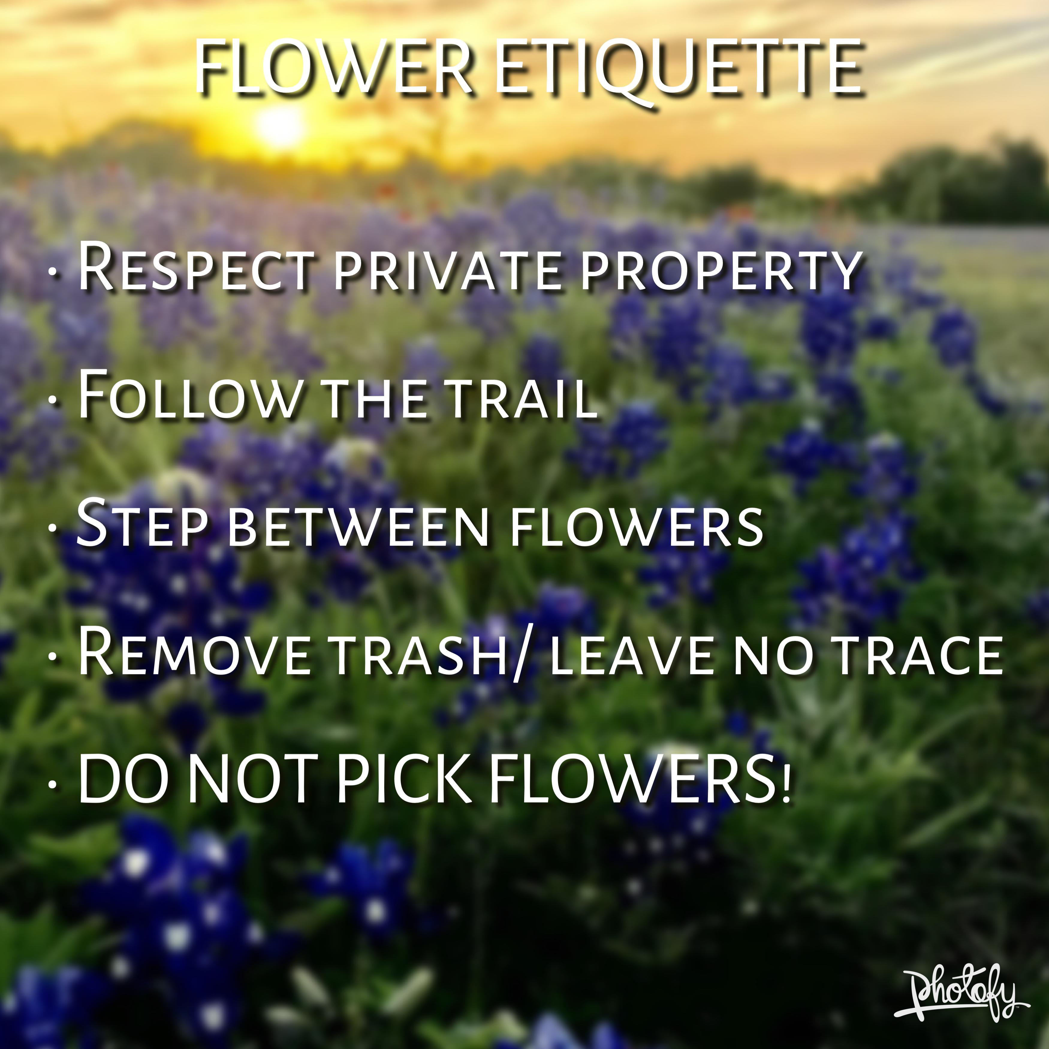 Bluebonnet Etiquette