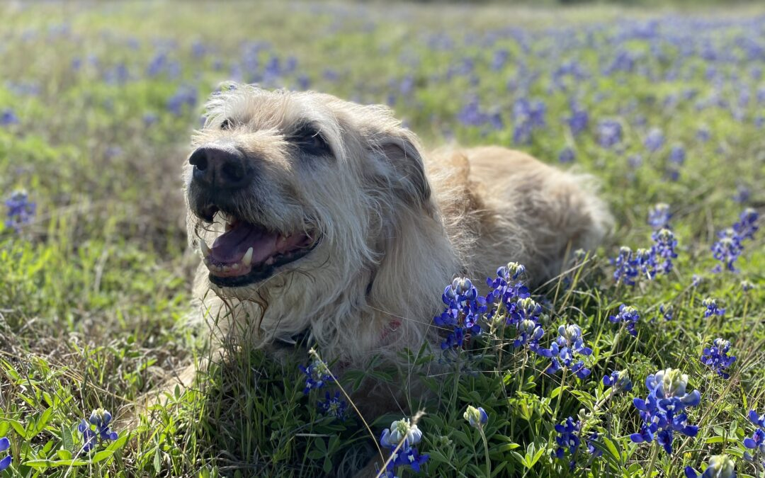 Our Whirlwind Weekend in Dog Friendly Hill Country