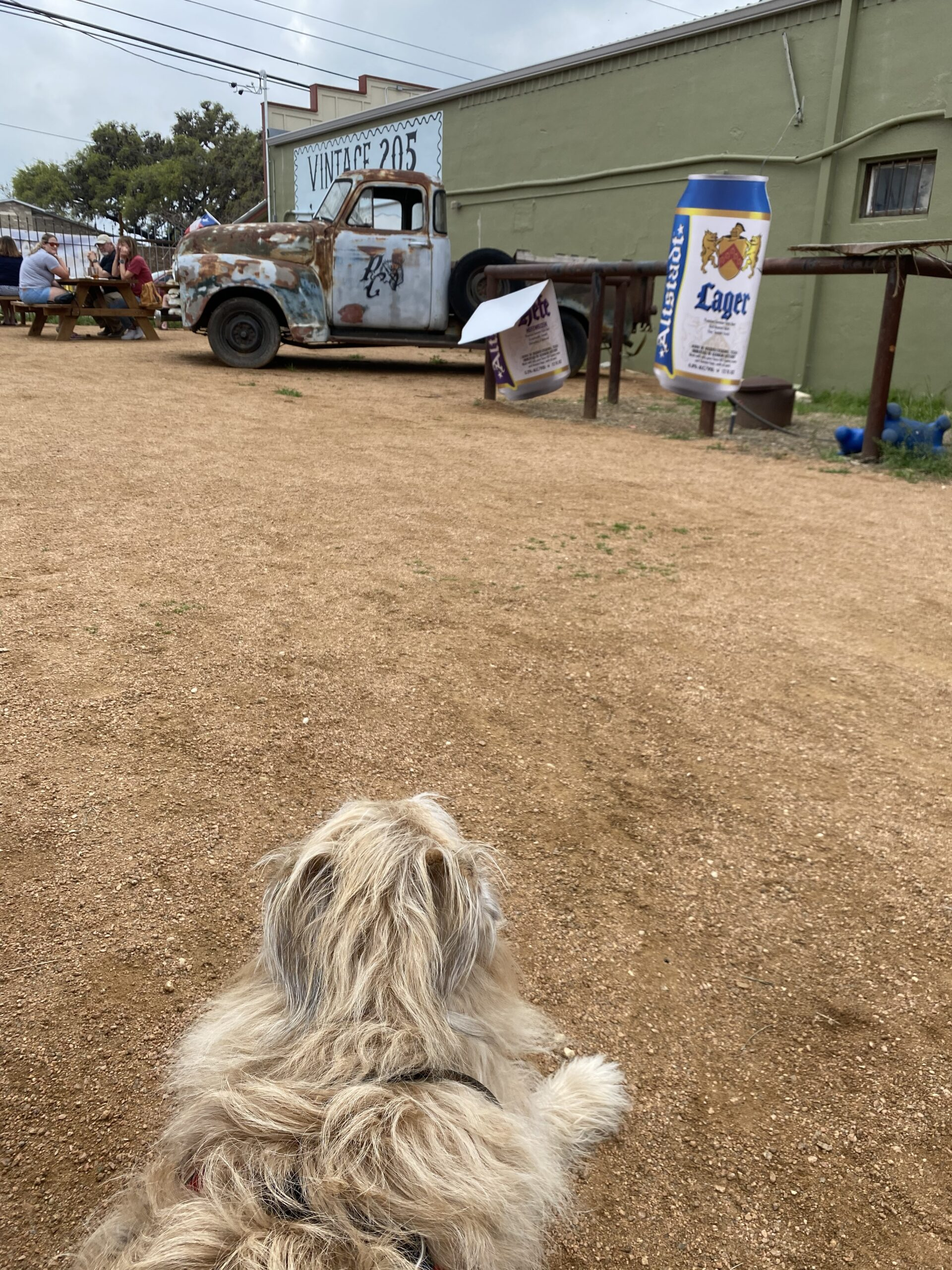 Dog lounging at outdoor bar