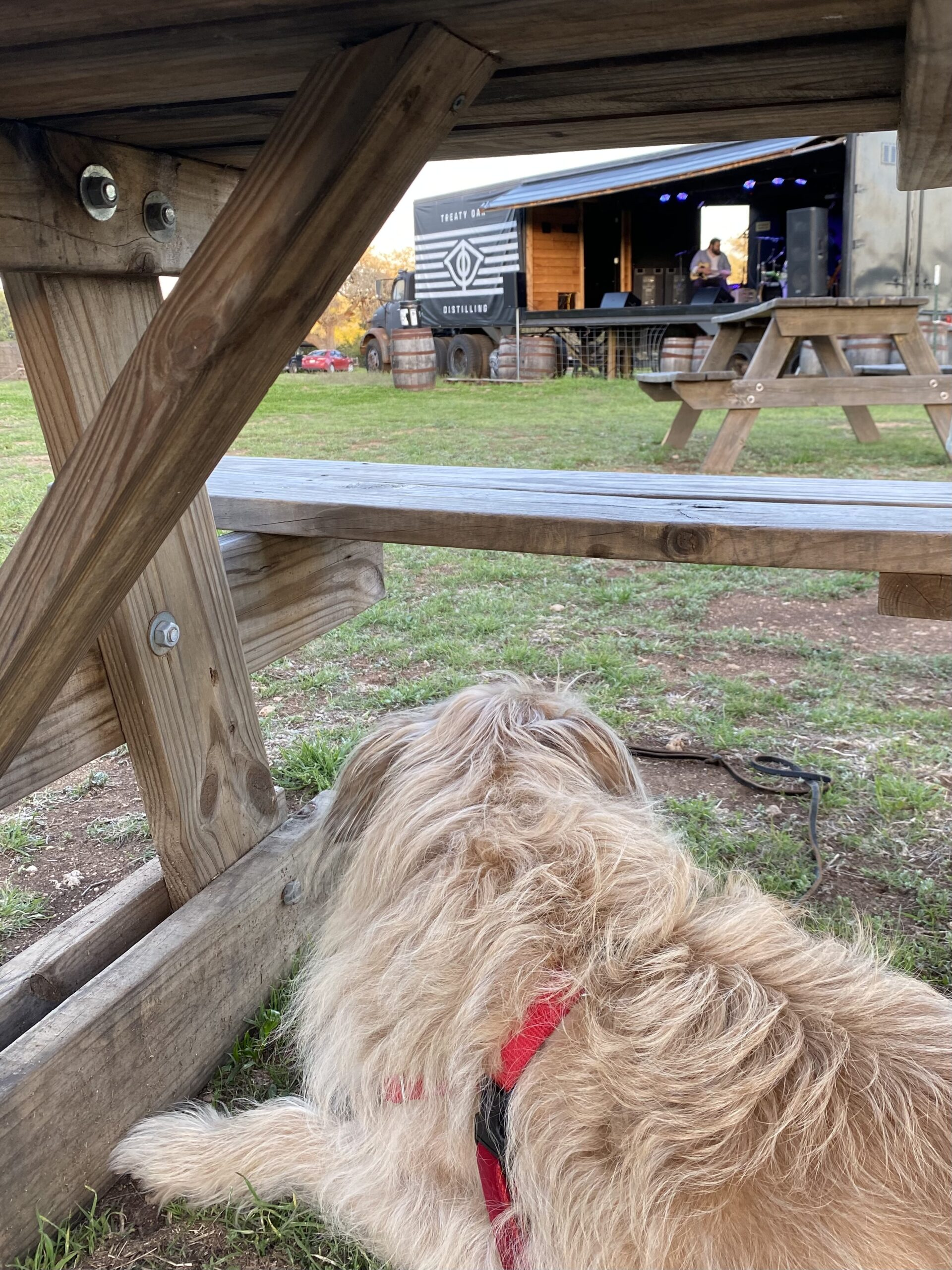 Dog under a picnic table