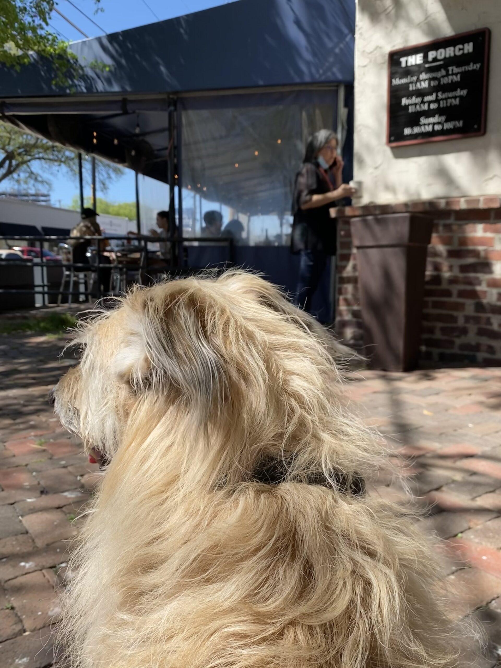 Dog outside restaurant