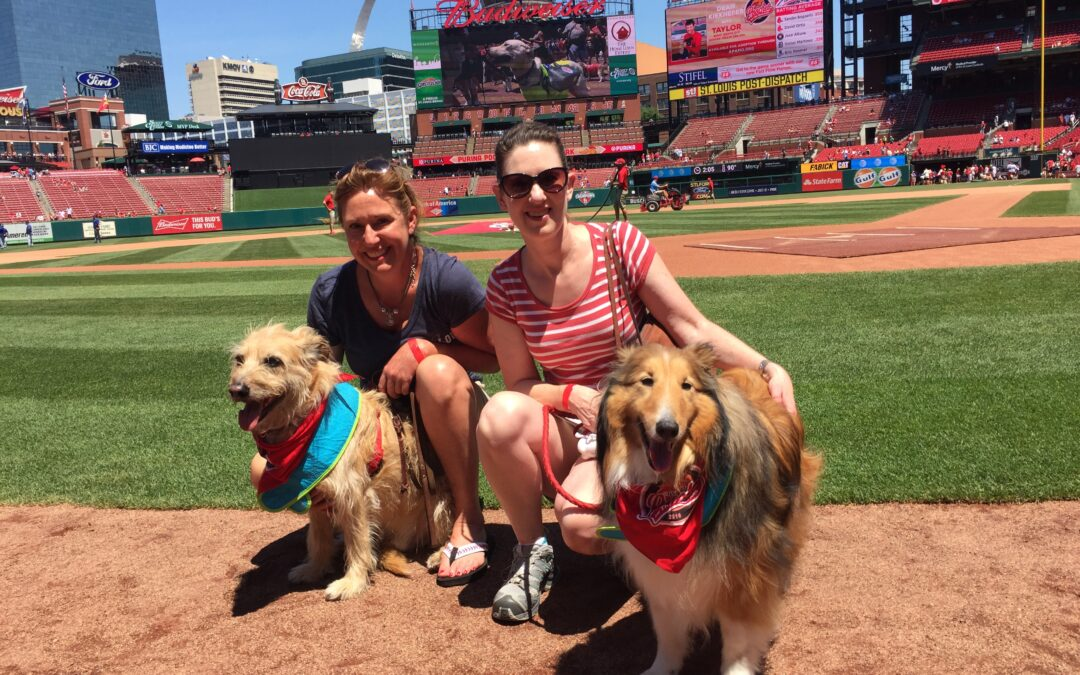 Pooches in the Ballpark